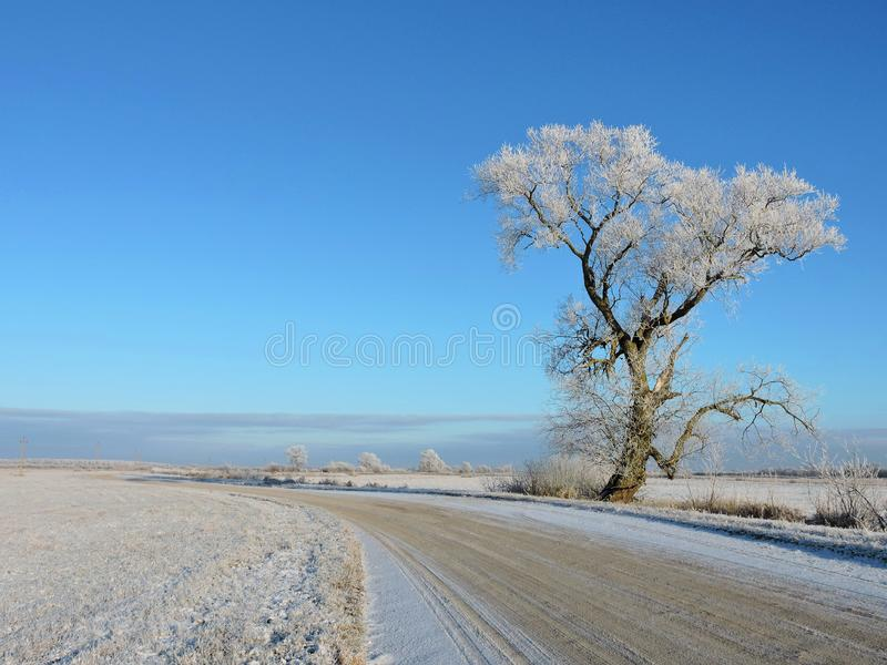 Old snowy tree and road in winter, Lithuania stock image