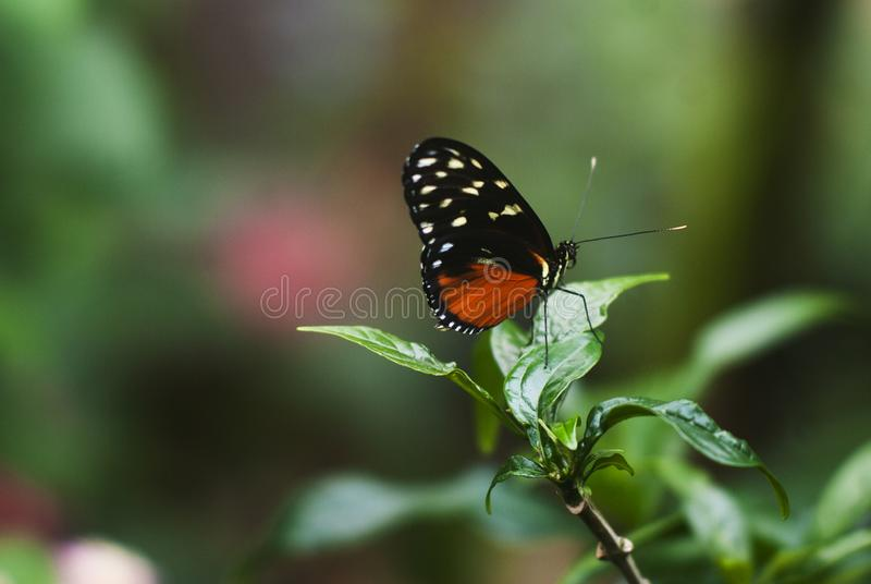 Butterfly close-up royalty free stock photos