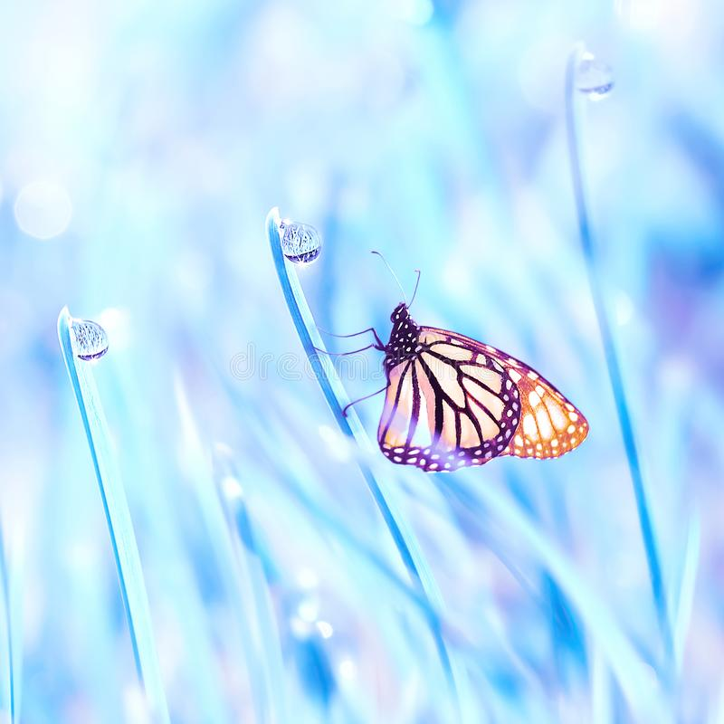 Beautiful orange butterfly on the blue fantastic grass with dew drops. Summer fresh background. Free copy space. stock images