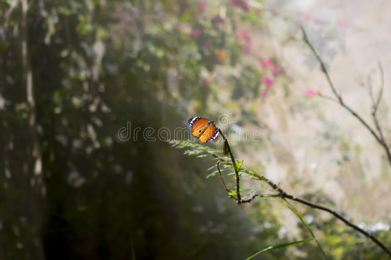 A beautiful orange butterfly in a magical forest stock images