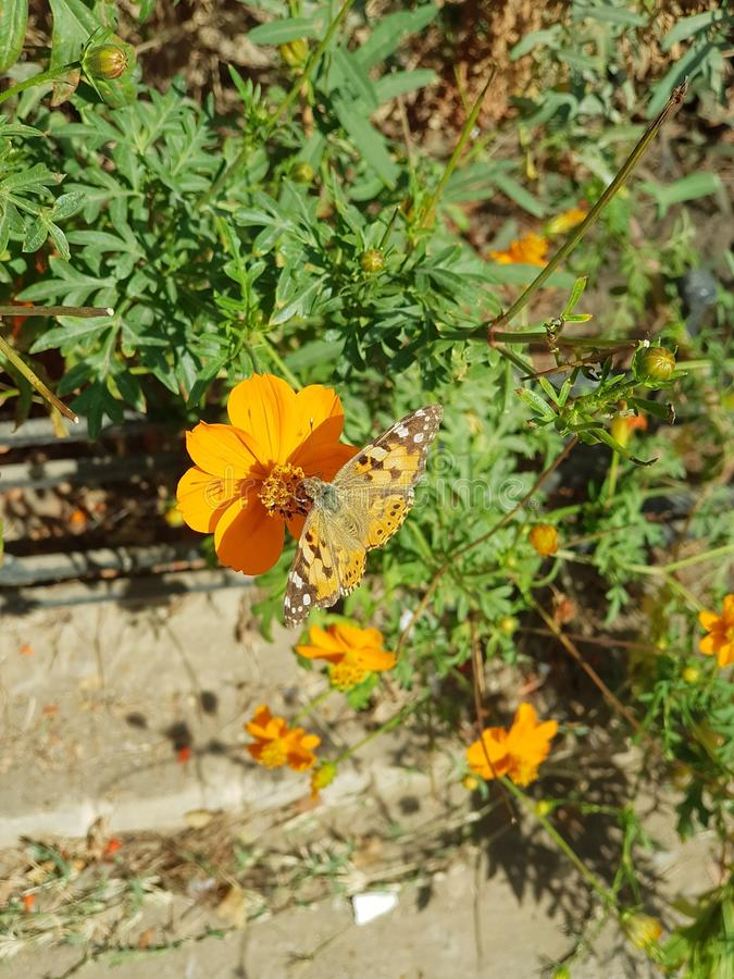Beautiful orange flower and butterfly with green leaves stock images