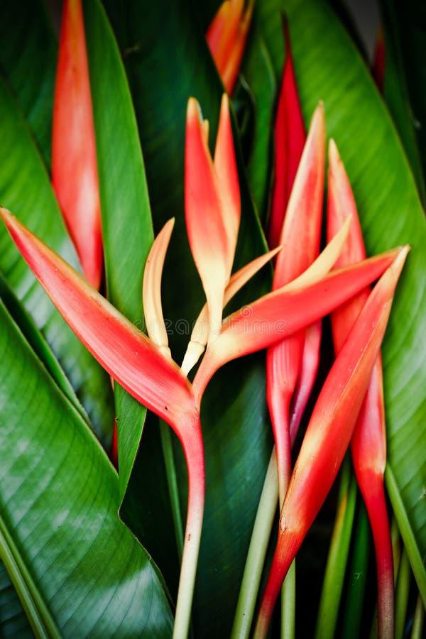 Beautiful orange flowers bird of paradise stock image image of download beautiful orange flowers bird of paradise stock image image of island mightylinksfo