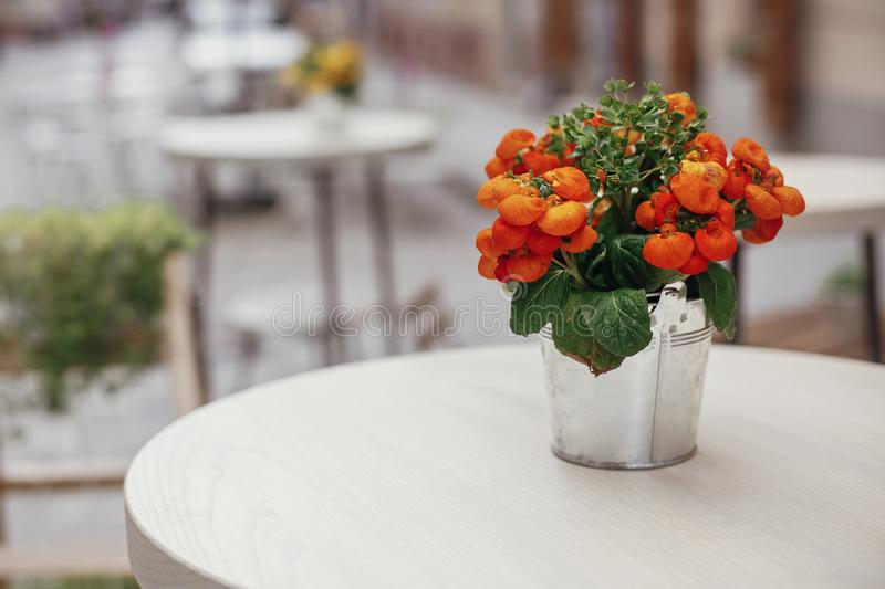 Beautiful orange flowers in metal bucket on wooden table at caf. E terrace in city street. Street decor. Space for text royalty free stock image
