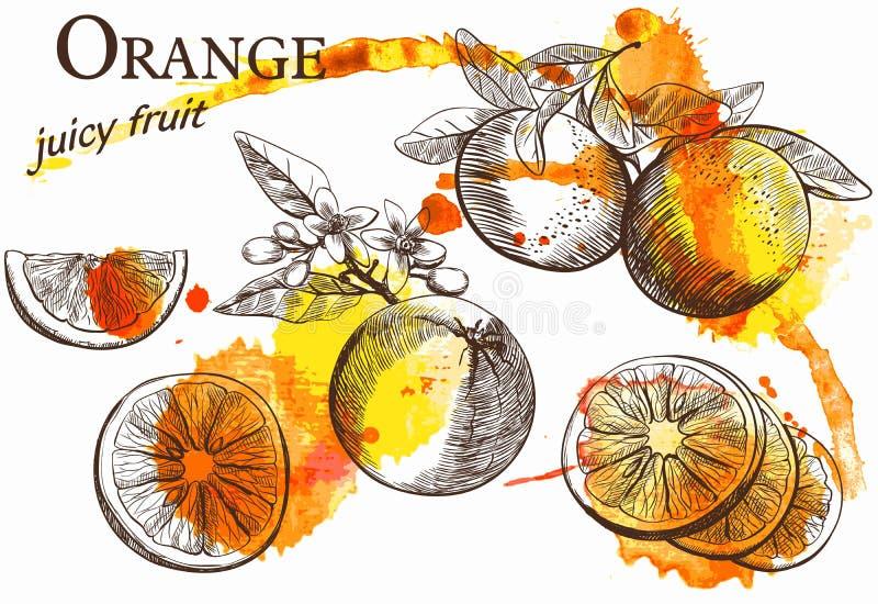 Beautiful orange stock illustration