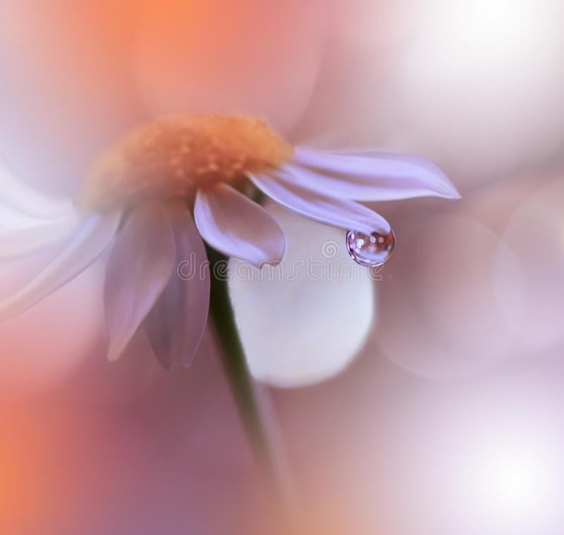 Free Beautiful Orange Nature Background.Abstract Artistic Wallpaper.Macro Photography.Floral Art Design.Daisy Flower.Coral Color. Royalty Free Stock Photography - 158881587