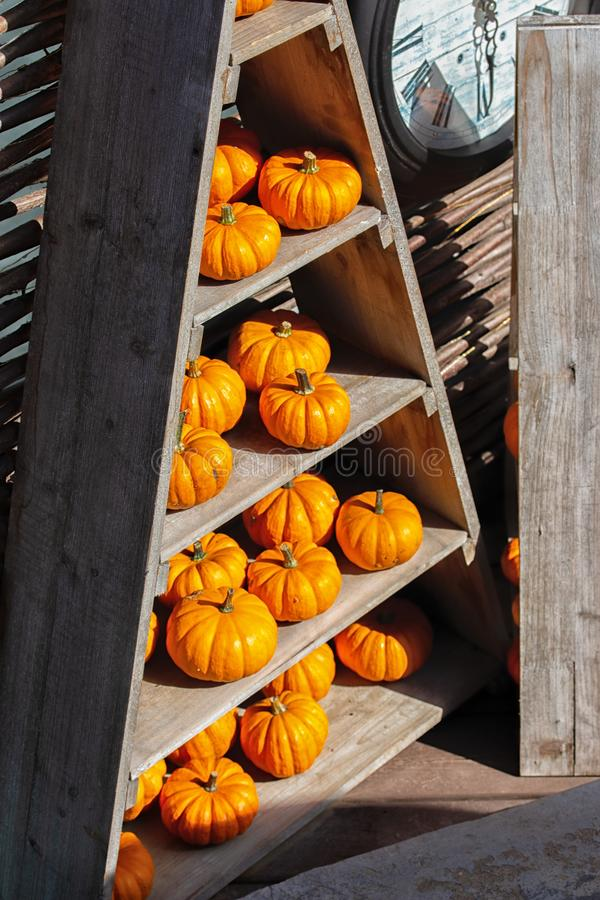 Beautiful orange pumpkins on the decorative wooden shelves of a triangular rack. Harvest Vegetable Shop Decor For Halloween. Small royalty free stock images