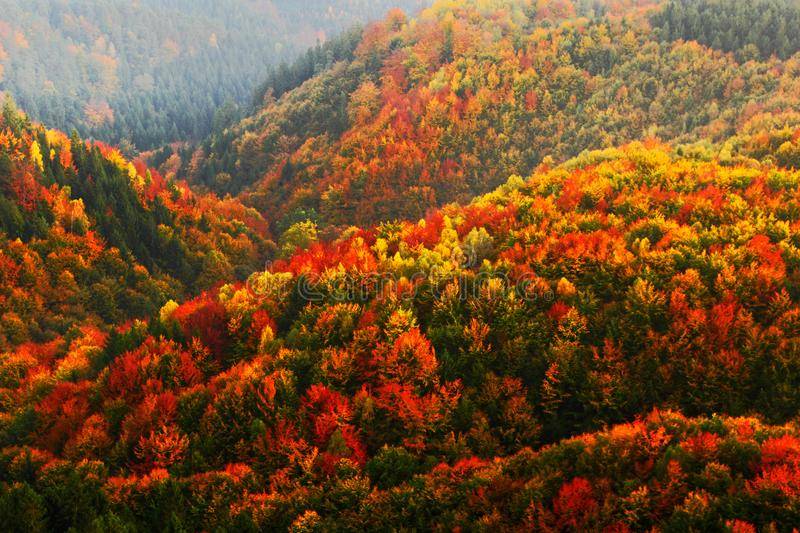 Beautiful orange and red autumn forest. Autumn forest, many trees in the orange hills, orange oak, yellow birch, green spruce, Boh stock images