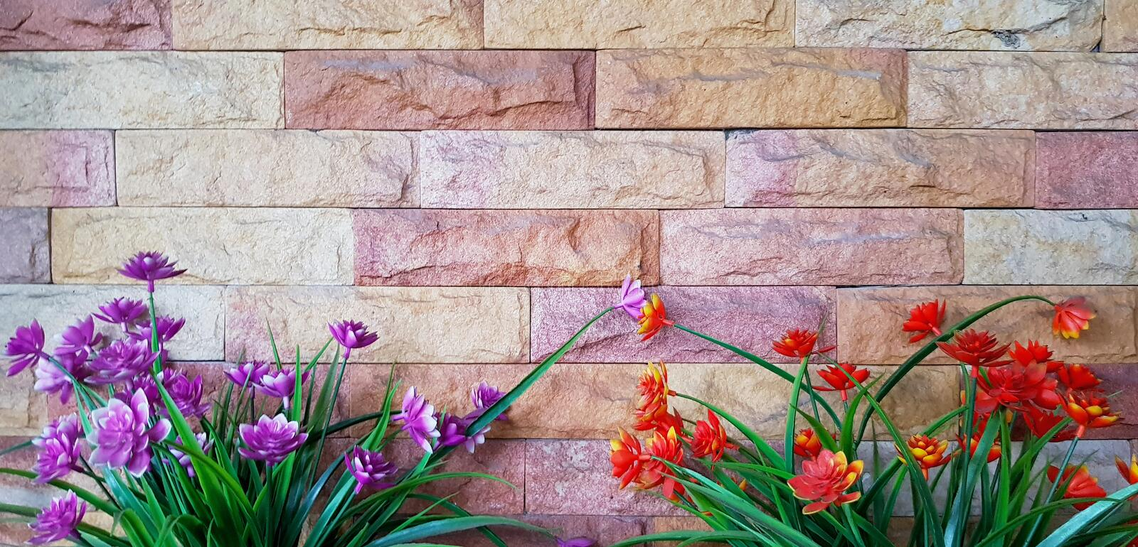 Beautiful orange or red flower and purple or violet flower blooming on grunge brick wall or wallpaper royalty free stock photo
