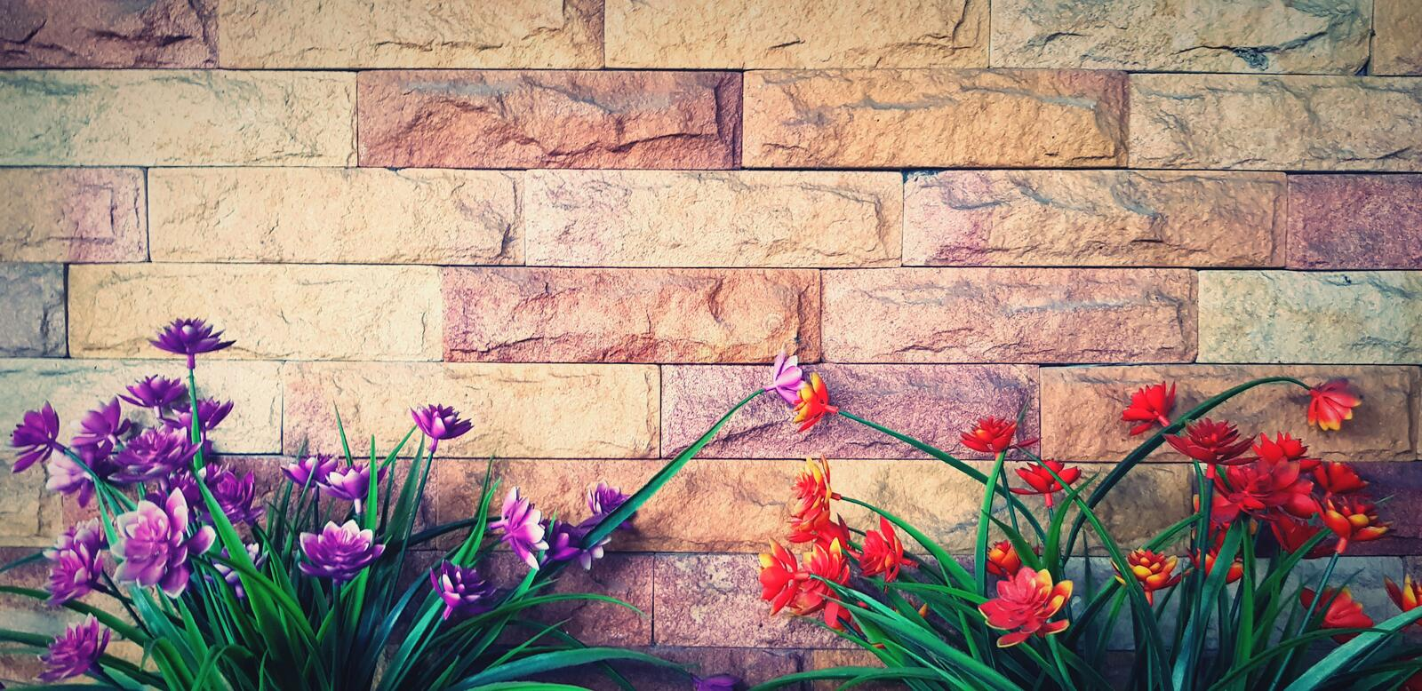 Beautiful orange or red flower and purple or violet flower blooming on grunge brick wall or wallpaper royalty free stock image
