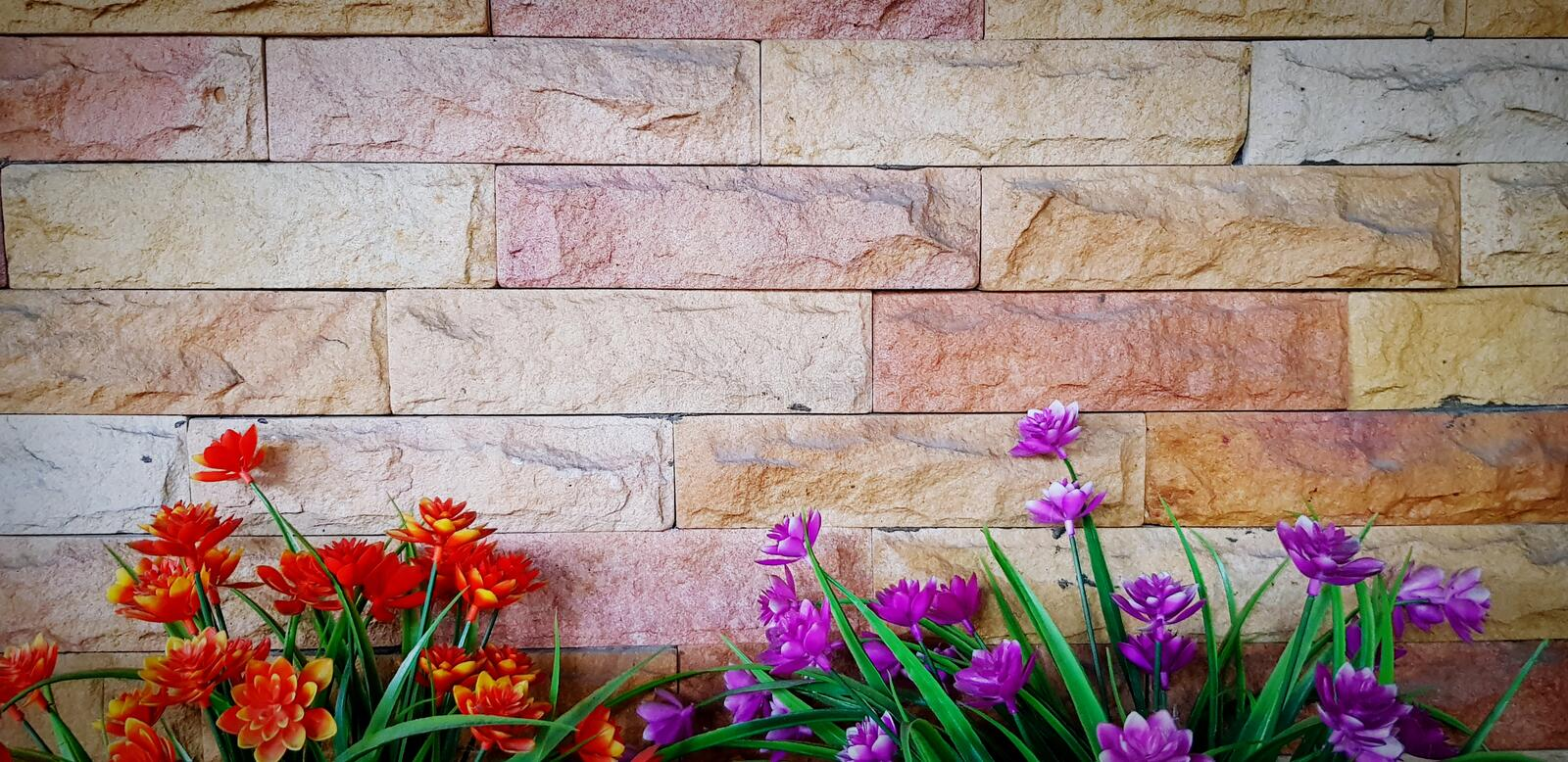 Beautiful orange or red flower and purple or violet flower blooming on grunge brick wall or wallpaper stock images