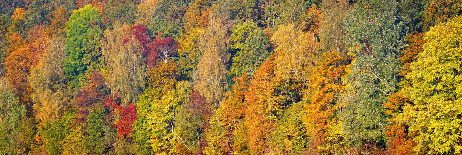 Beautiful orange, red and green autumn forest, many trees on the orange hills panorama. Autumn background long panorama stock photos