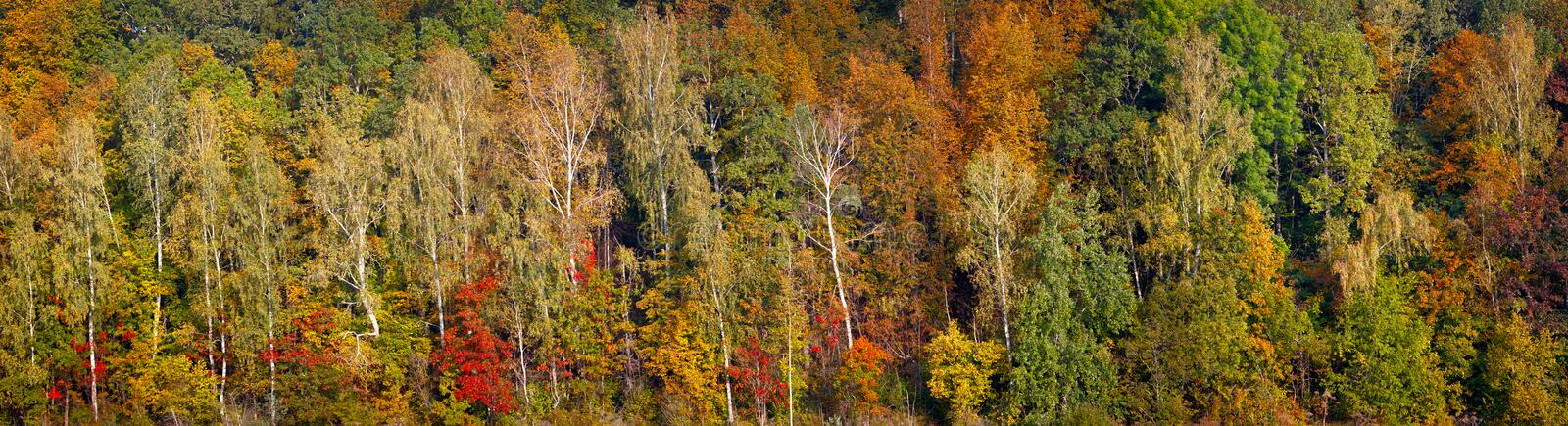 Beautiful orange, red and green autumn forest, many trees on the orange hills panorama. Autumn background long panorama web banner royalty free stock image