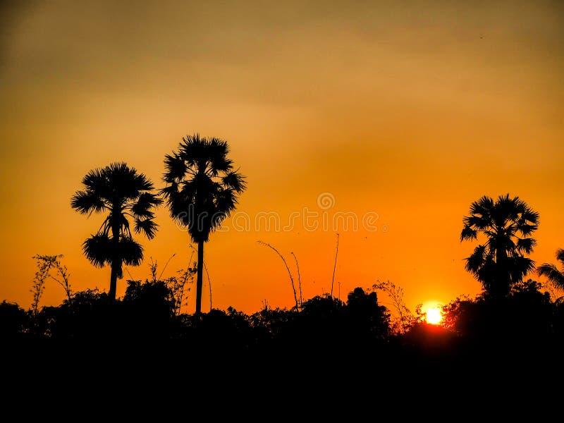 Beautiful Orange Sunset nature amazing landscape with palm trees silhouette background Beautiful Orange Sunset landscape with palm stock photography