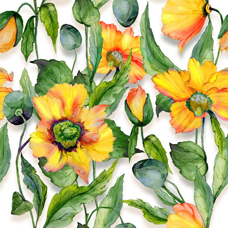 Beautiful orange welsh poppy flowers with green leaves on white background. Seamless floral pattern. Watercolor painting. Hand painted illustration. Fabric royalty free illustration