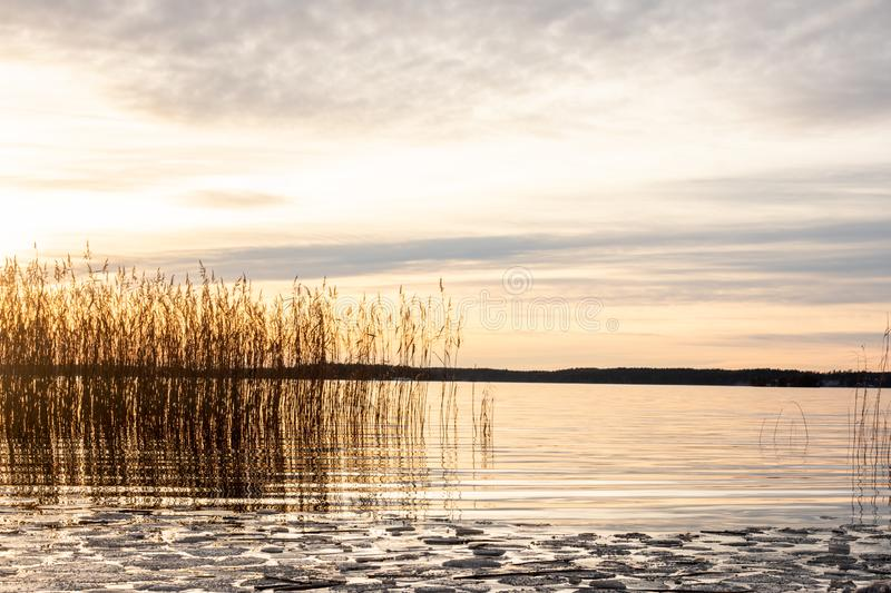 Beautiful orange winter landscape sunset over calm lake water with ice floe and reed against sea horizon. stock image