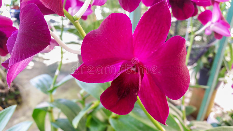 Beautiful orchid background. In garden royalty free stock photography
