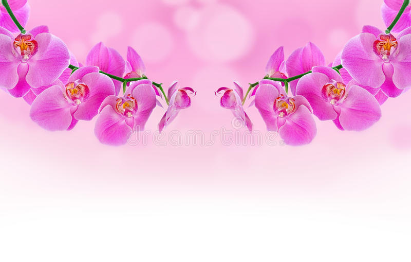 Download Beautiful Orchid And Blur Bokeh Stock Photo - Image: 24248672