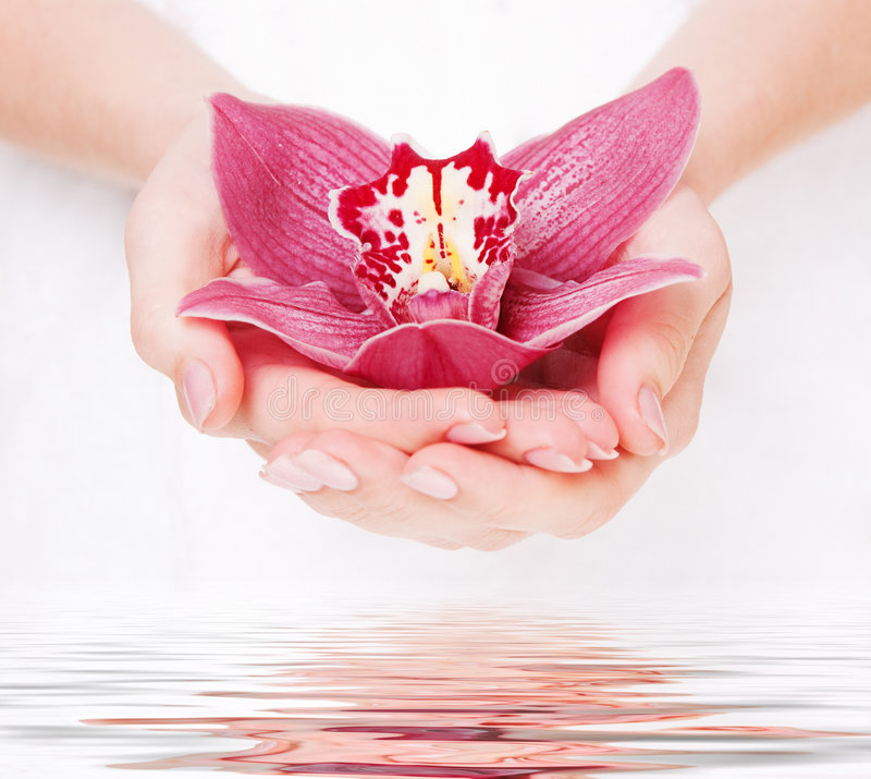 Beautiful orchid in fem palms. Beautiful pink orchid in fem palms stock image