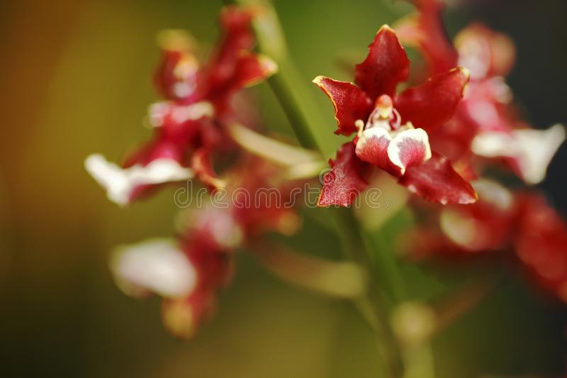 Beautiful orchid flower grow in tropical garden with natural background, wallpaper natural closeup macro, postcard beauty and stock images