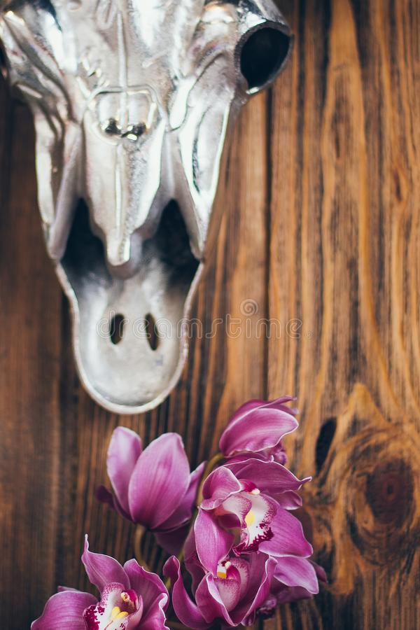 Beautiful orchid flowers on rustic wooden background with a metal cow skull head stock photography