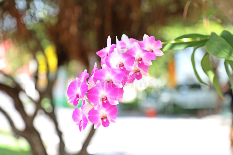 Beautiful Orchid in the garden stock photography