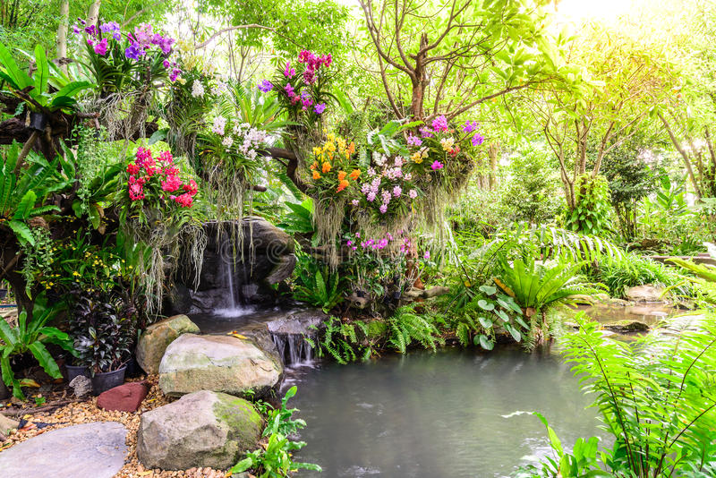 Download Beautiful Orchid Garden With Waterfall Stock Photo