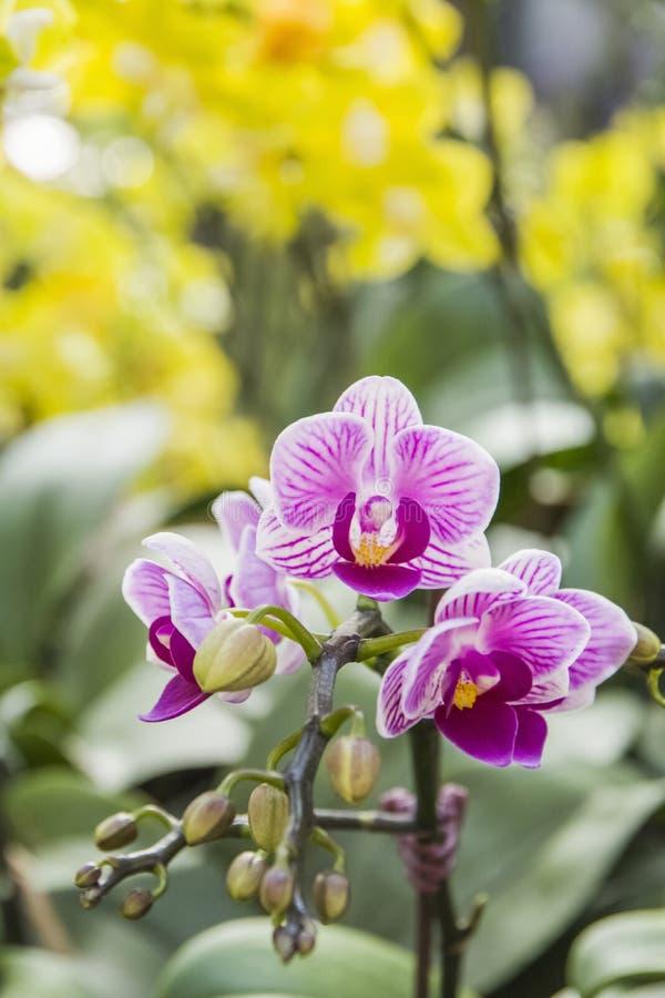 Beautiful Orchids stock photo