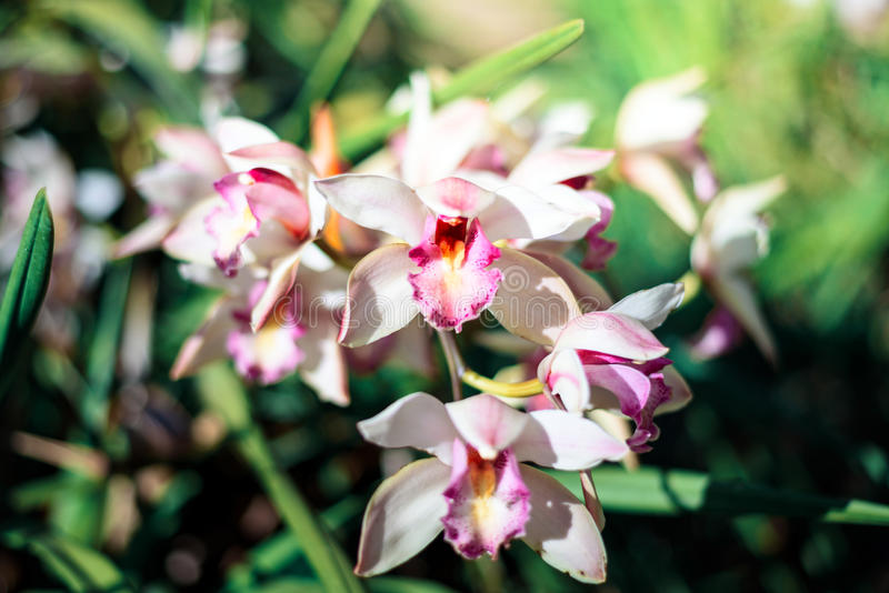 Beautiful Orchids. Beautiful purple Orchids on the tree in the garden stock image