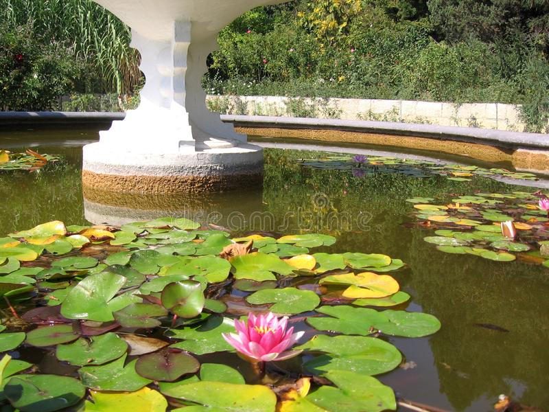 Beautiful ornamental pond with water lilies blooming. A garden  summer stock photo