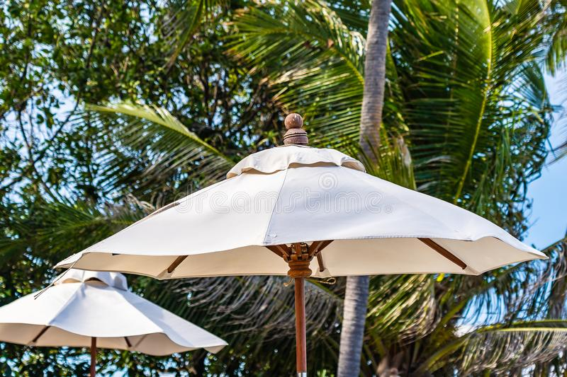 Beautiful outdoor nature with umbrella chair and coconut palm tree around swimming pool in hotel and resort. For holiday vacation concept royalty free stock photo