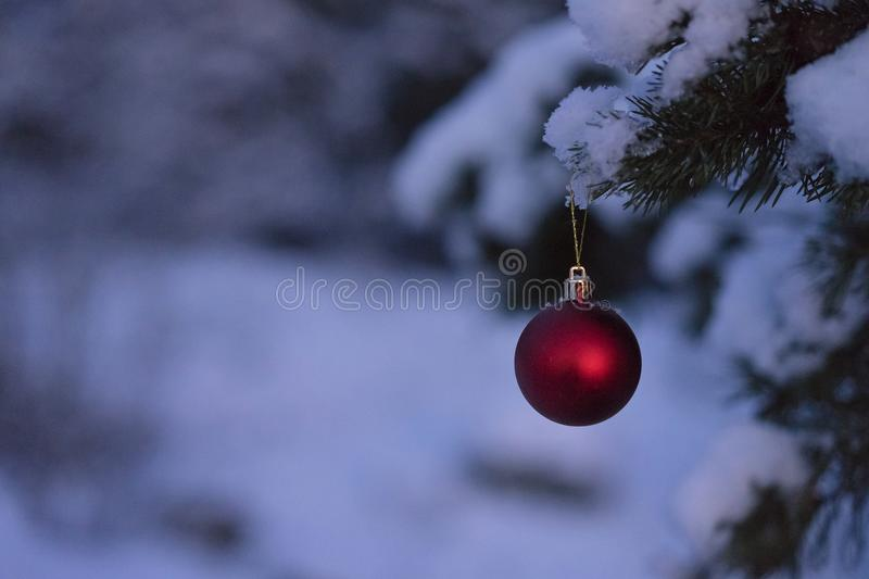 Beautiful outdoor photo of red christmas decoration ball in small snowy tree. Wonderful cold winter dusk evening in Sweden Scandinavia. Nice details and blue royalty free stock photography
