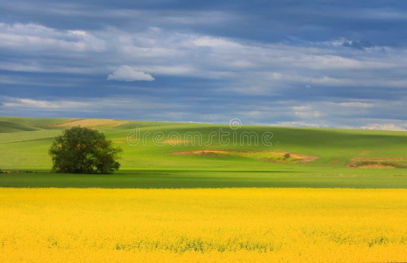 Beautiful painting like scenery stock photos