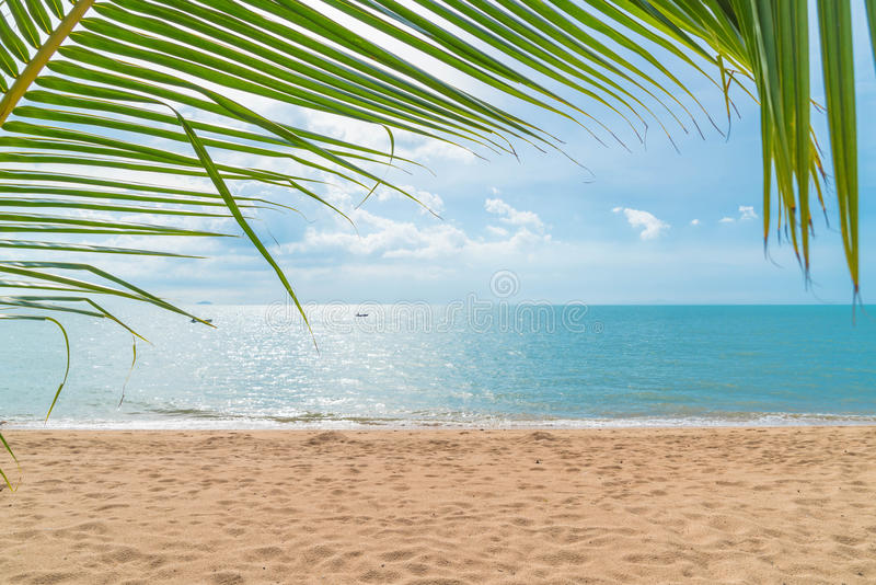 Palm with empty beach. Beautiful palm with empty beach stock image