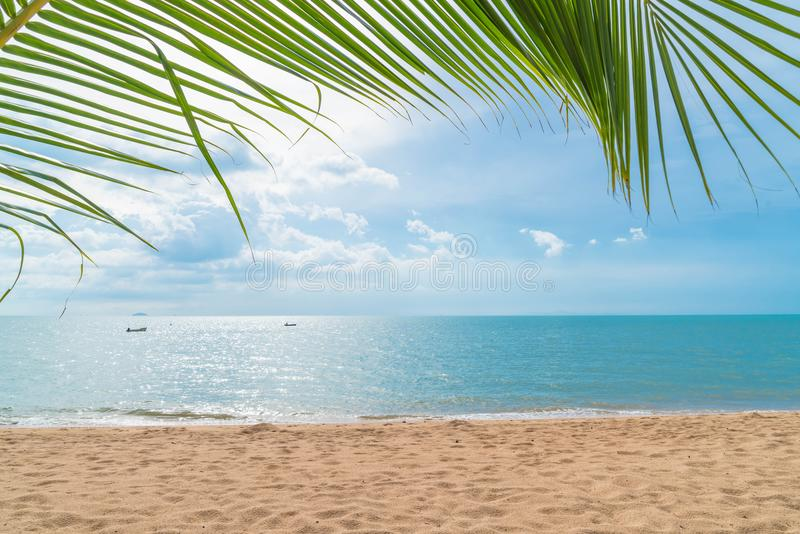 Palm with empty beach. Beautiful palm with empty beach royalty free stock image