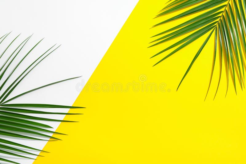 Beautiful palm leaves on two tone background, top view and space for text. Exotic plant royalty free stock photo