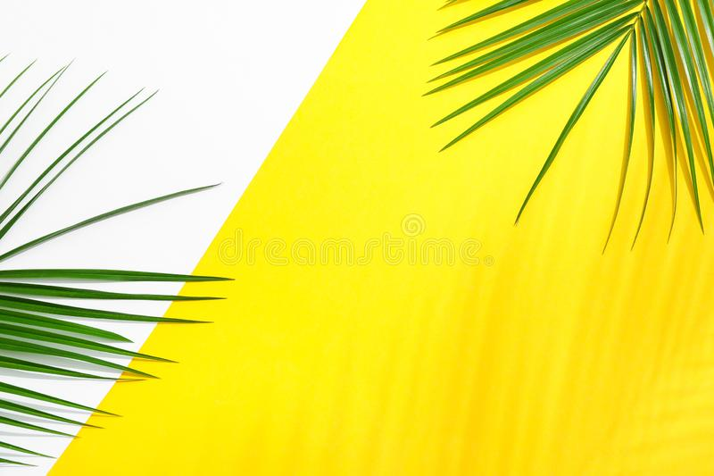 Beautiful palm leaves on two tone background, top view and space for text. Exotic plant stock images