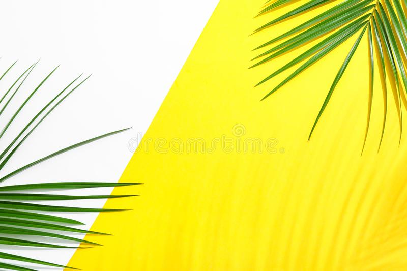 Beautiful palm leaves on two tone background, top view and space for text. Exotic plant royalty free stock image