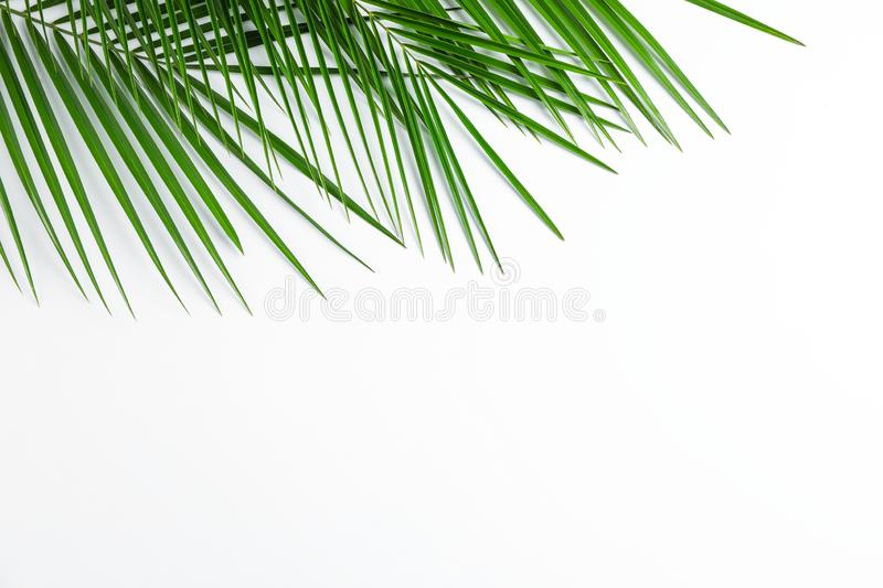 Beautiful palm leaves on white background, top view and space for text royalty free stock photos