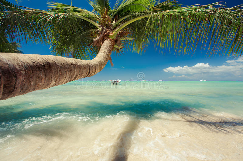 Beautiful palm tree and a boat over caribbean sea stock image