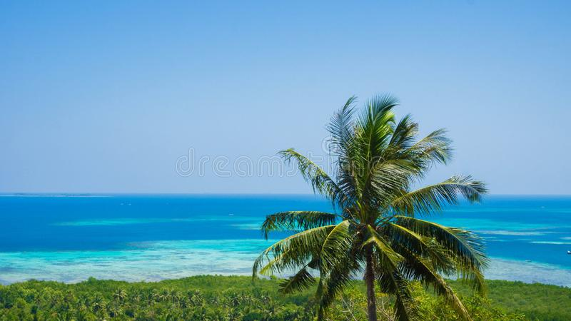 A beautiful palm tree coconut with green forest aerial view sea landscape with blue water sea in sunny day in karimun jawa indones stock photos
