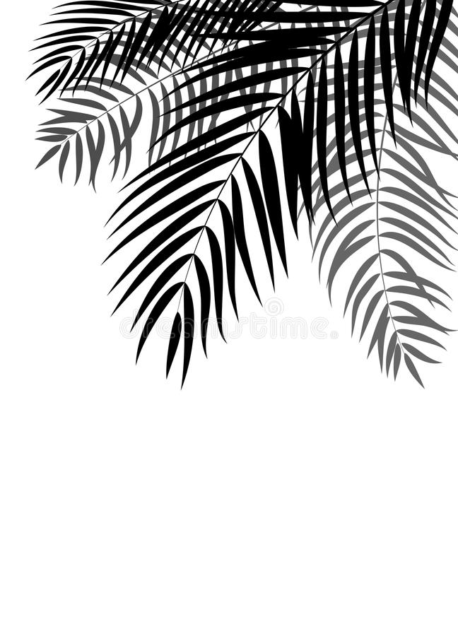 Beautiful Palm Tree Leaf Silhouette Background Vector. Illustration EPS10 stock illustration