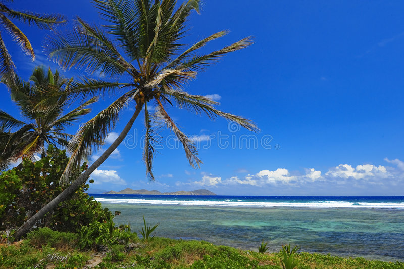 Download Beautiful Palm Trees stock photo. Image of backdrop, landscape - 5145902