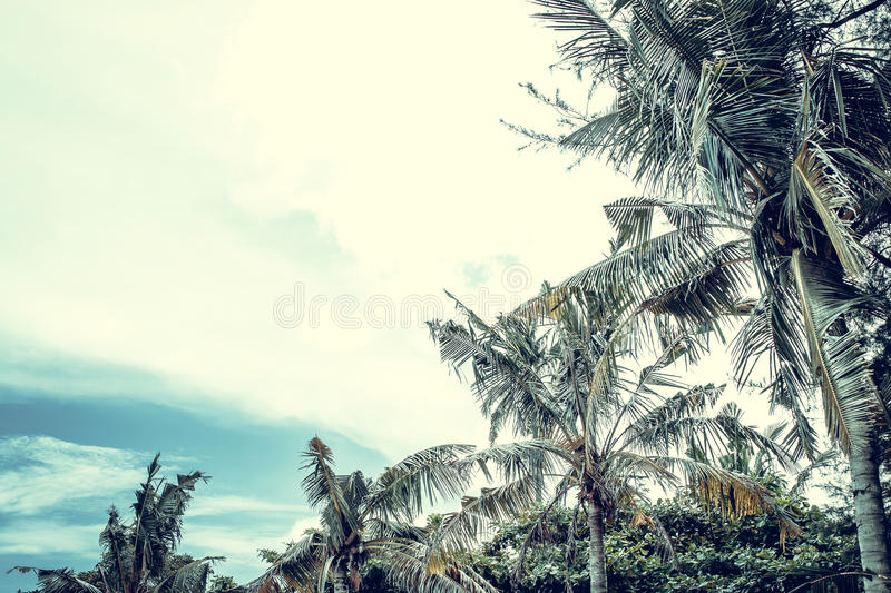Beautiful palm trees on the beautiful landscape background and blue sky. Tropical beach palm trees relaxation zen stock photography