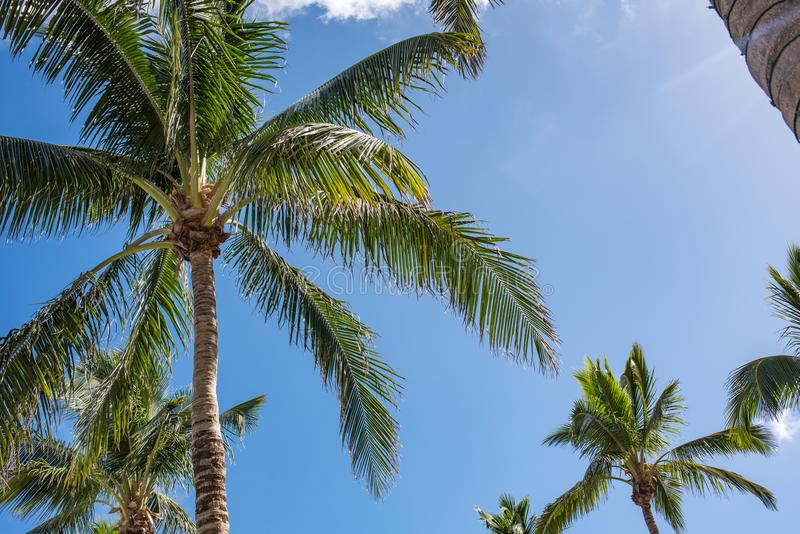 Beautiful palm trees on a sunny day in Palm Beach Florida. stock photo