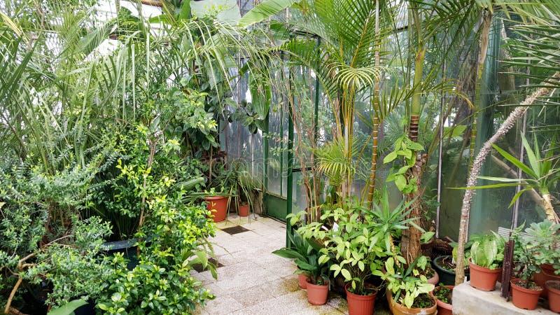 Beautiful palms in the Sofia Botanical Garden. Beautiful palms in hothouse . Sofia Botanical Garden stock photo