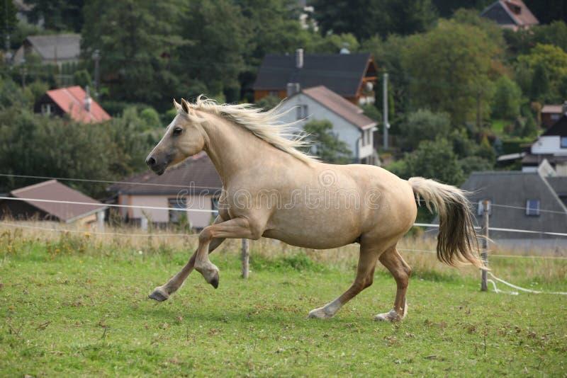 Download Beautiful Palomino Mare Wunning On Pasturage Stock Image - Image: 33812273