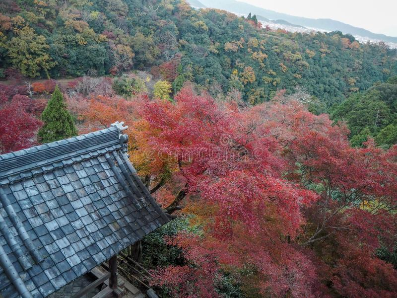 Beautiful panorama scene of colorful maple and fresh green trees in mountain with roof of japanese temple pavilion. For background stock photos