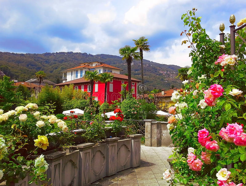 Beautiful panorama, spring blooming roses in the region Piedmont, Stresa, Northern Italy. royalty free stock photography