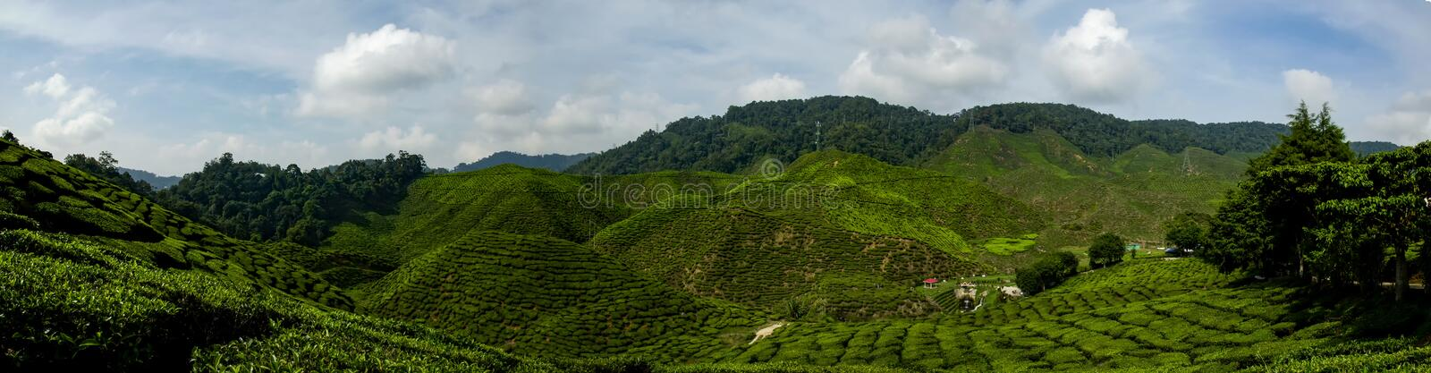 Beautiful panorama view at Cameron Highlands, Malaysia with green nature tea plantation near the hill. royalty free stock photo