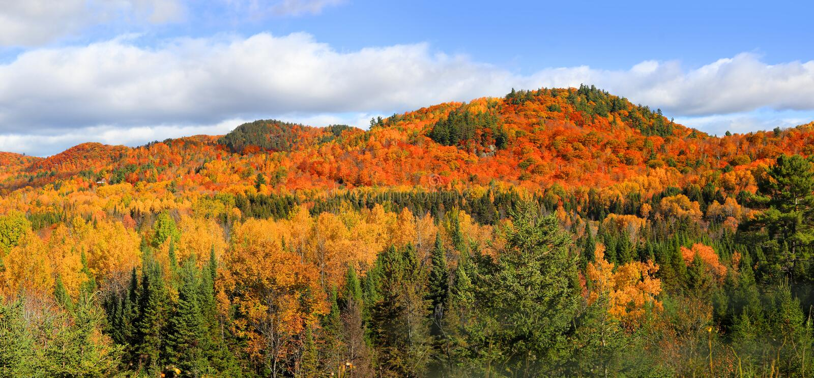 Panoramic landscape of fall foliage in Quebec royalty free stock photo